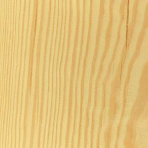 pine, spruce or larch